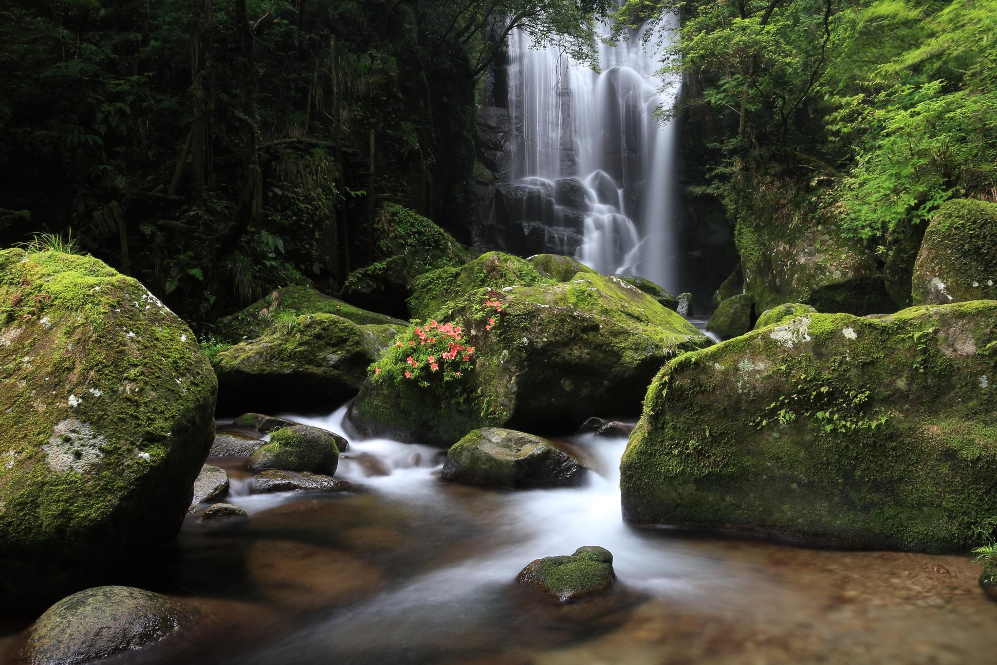 桑の木の滝